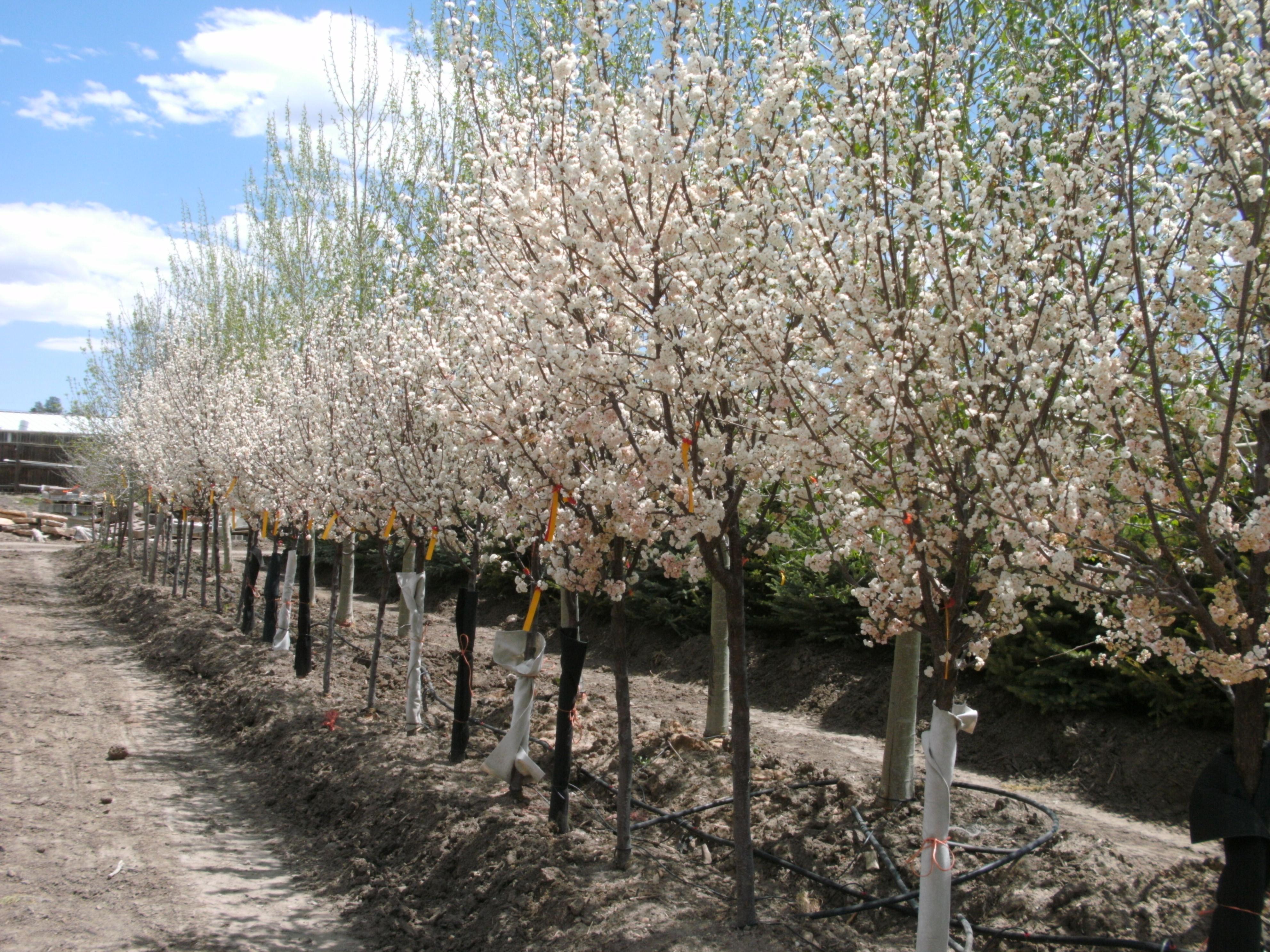 Colorado Tree Nursery Front Range